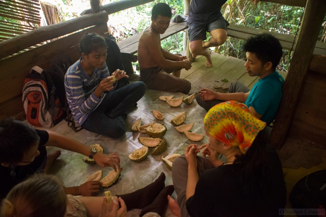 Eating fresh, semi-wild durian in the Indonesian rainforest